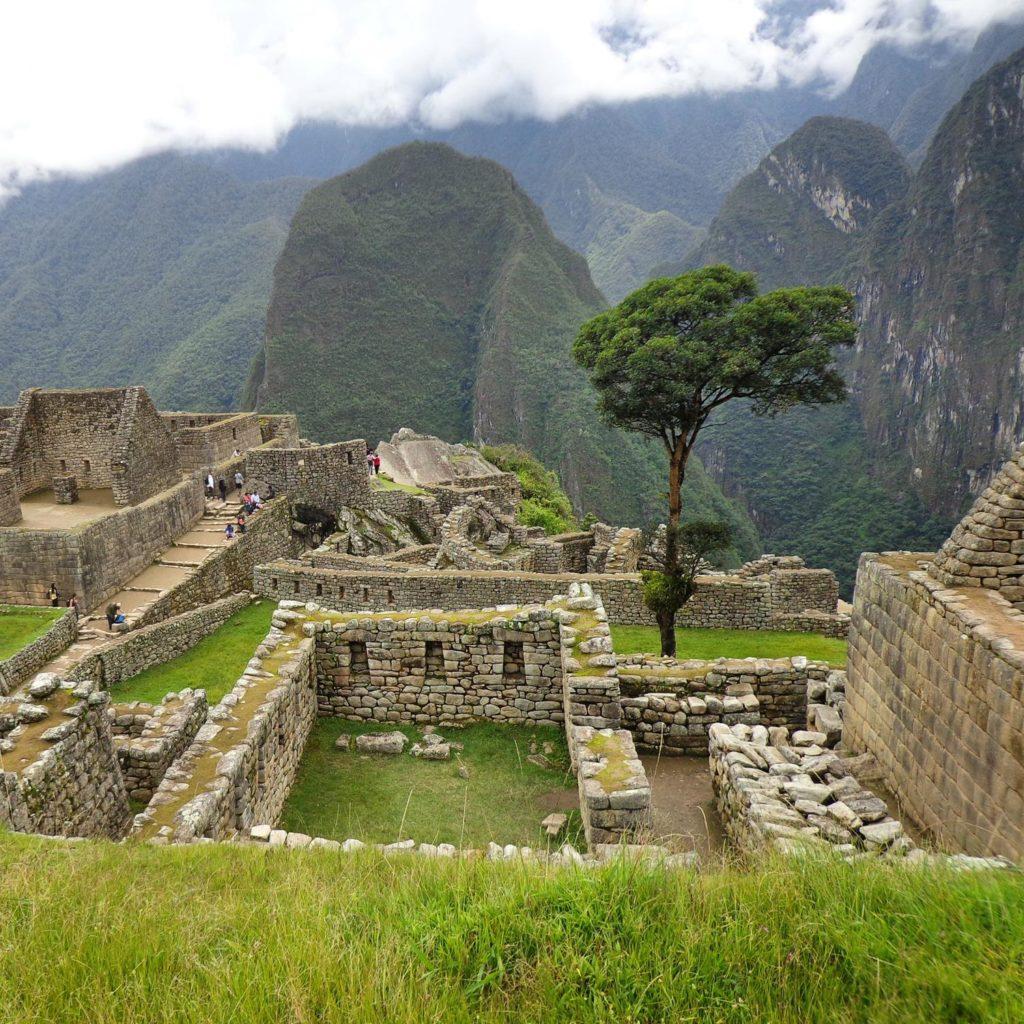 Arvore em Machu Picchu