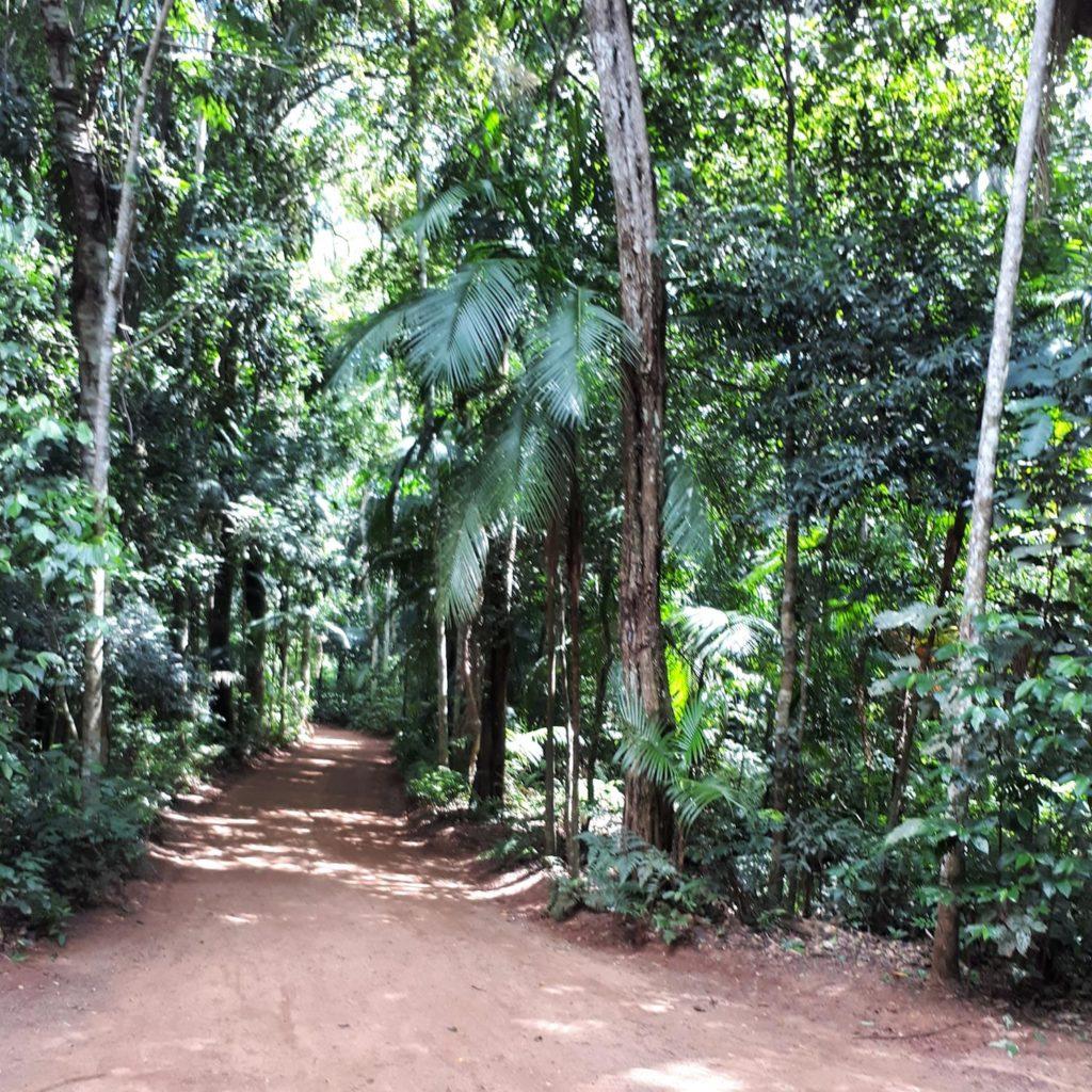 Trilha Macuco Safari