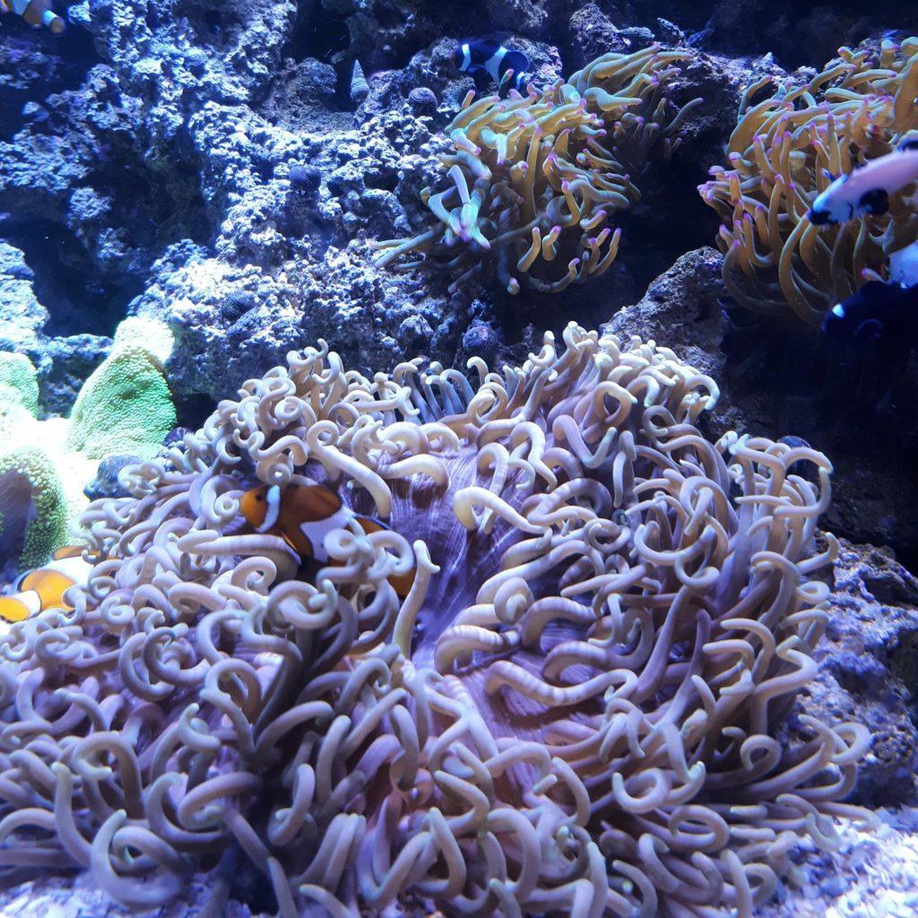 Nemo no AquaRio