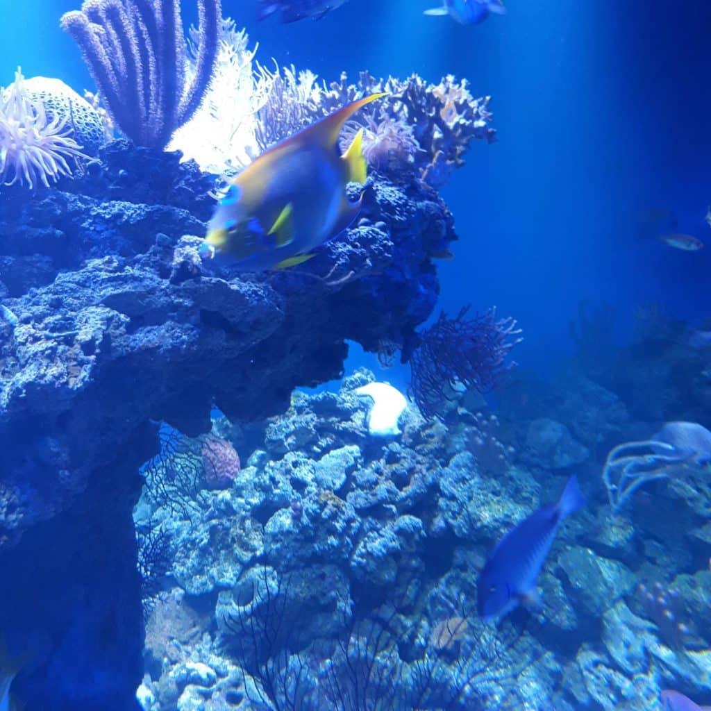Peixe AquaRio