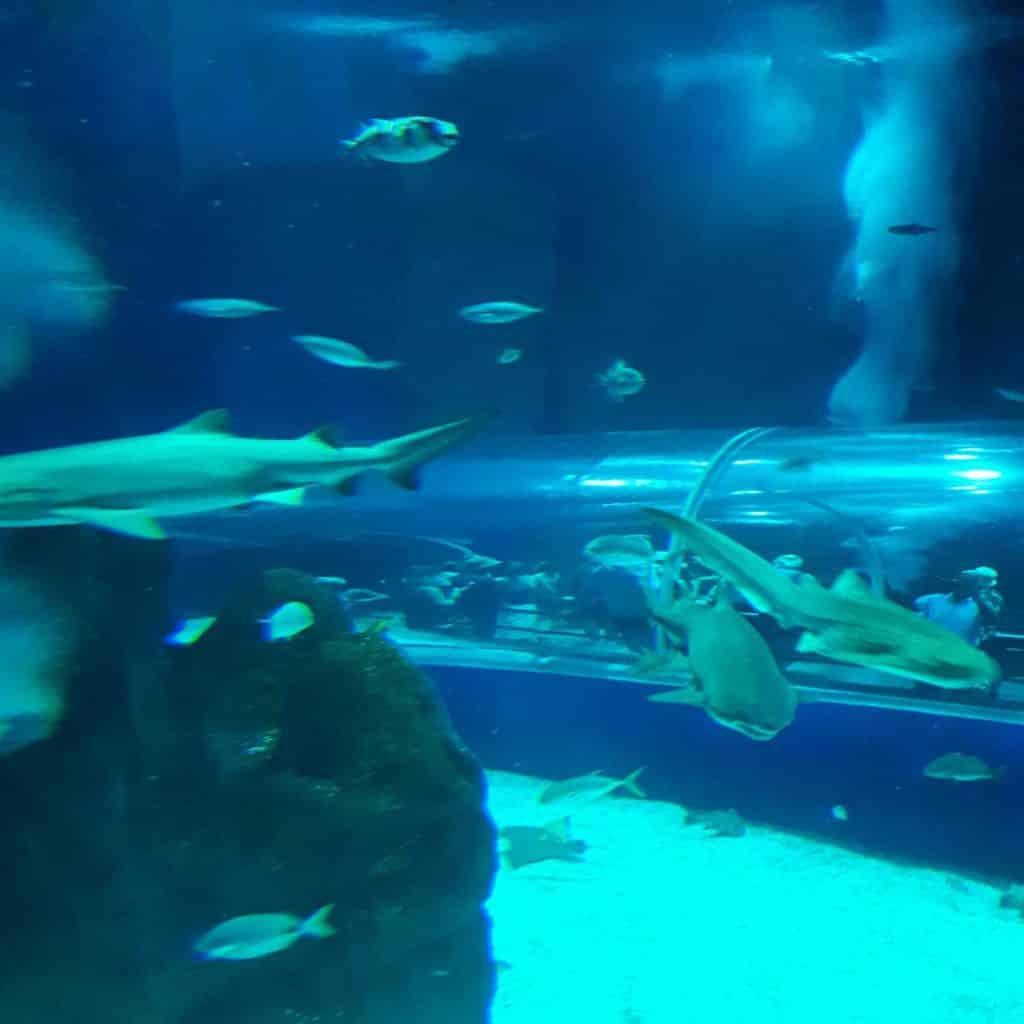 Tanque Oceânico AquaRio