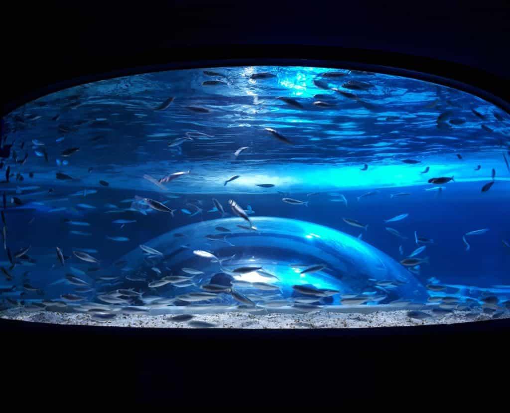 Tanque no AquaRio