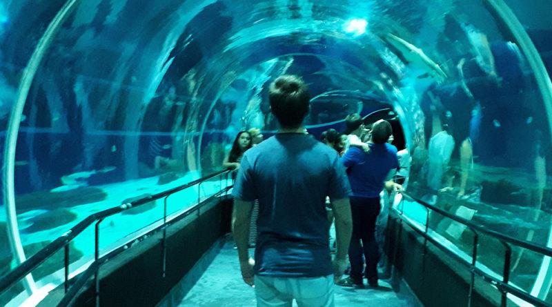 aquario rio de janeiro, diego cabraitz arena