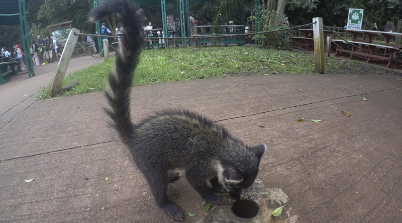 o que fazer em puerto iguazu
