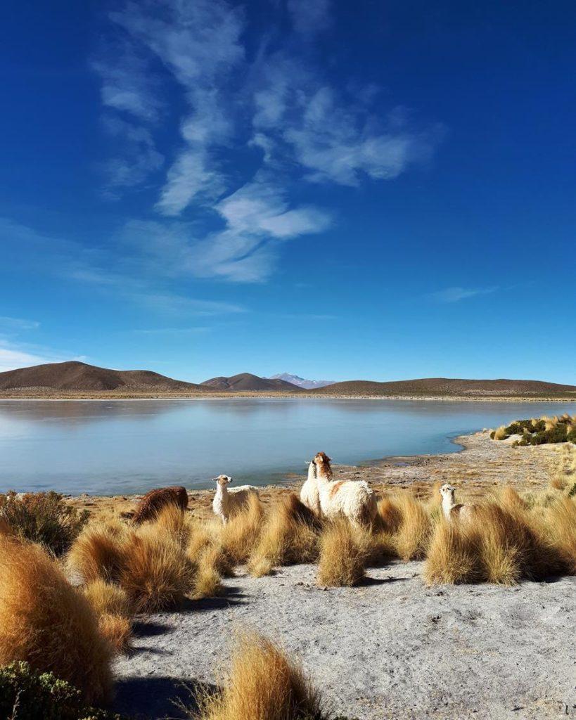Laguna Vinto Bolívia
