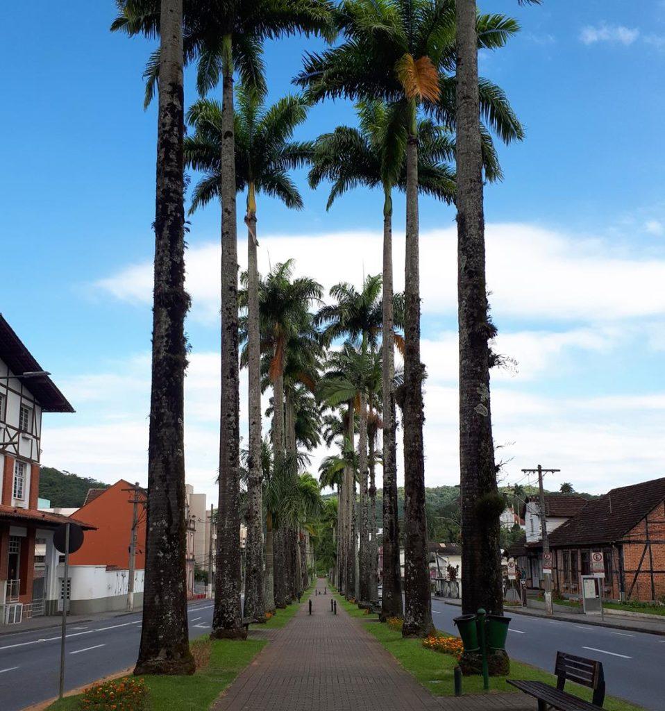 rua das Palmeiras Blumenau