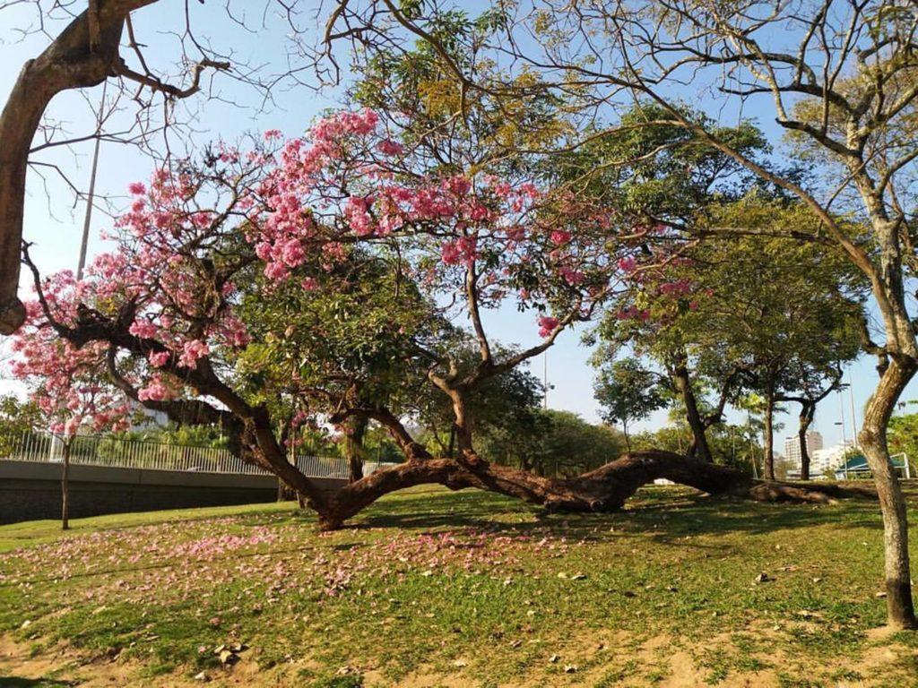 Praia do Flamengo, o que fazer no rio de janeiro