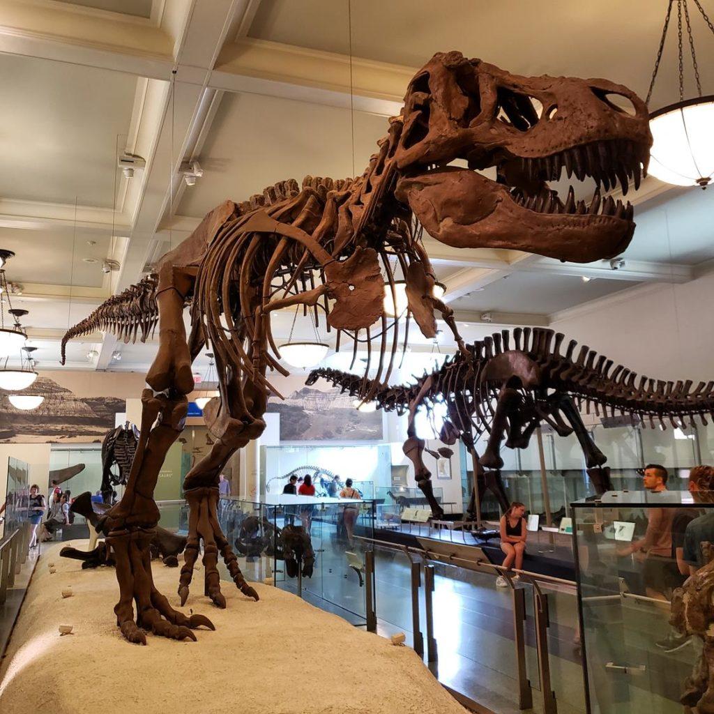 Dinossauro no museu de história natural de nova york