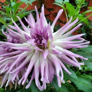 Flor roxa- Jardins de Singapura