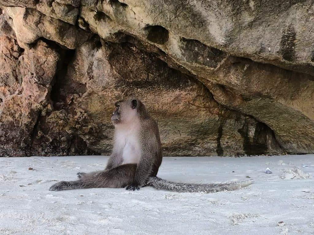 Monkey Beach tailandia