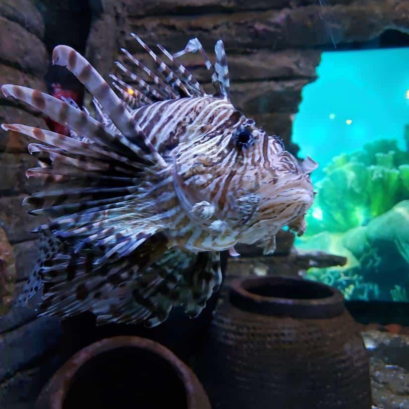 Aquario em kuala Lumpur - Aquaria