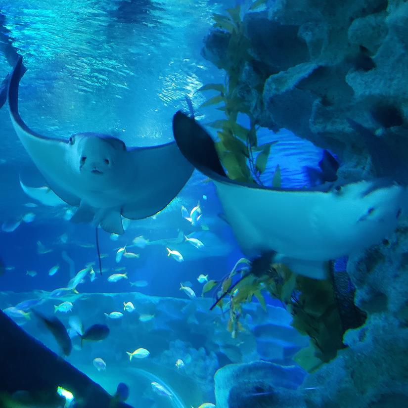 o que ver no Aquário de Kuala Lumpur