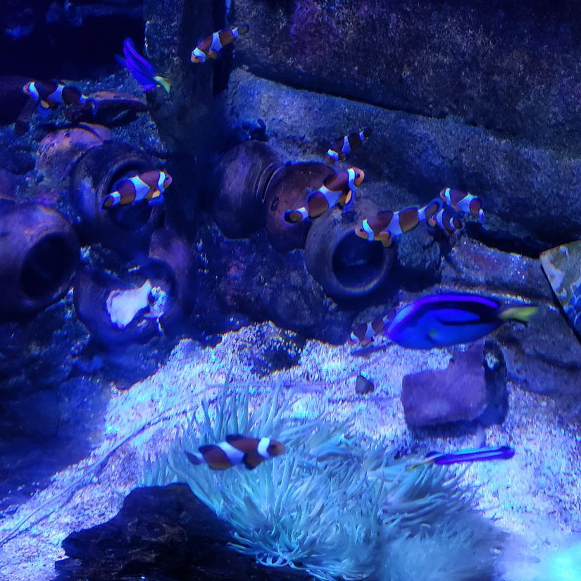 Nemo e dory no aquario de kuala lumpur