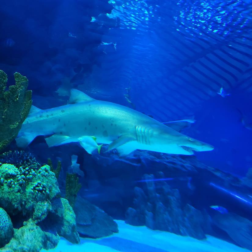 Tubarões no Aquário de Kuala Lumpur