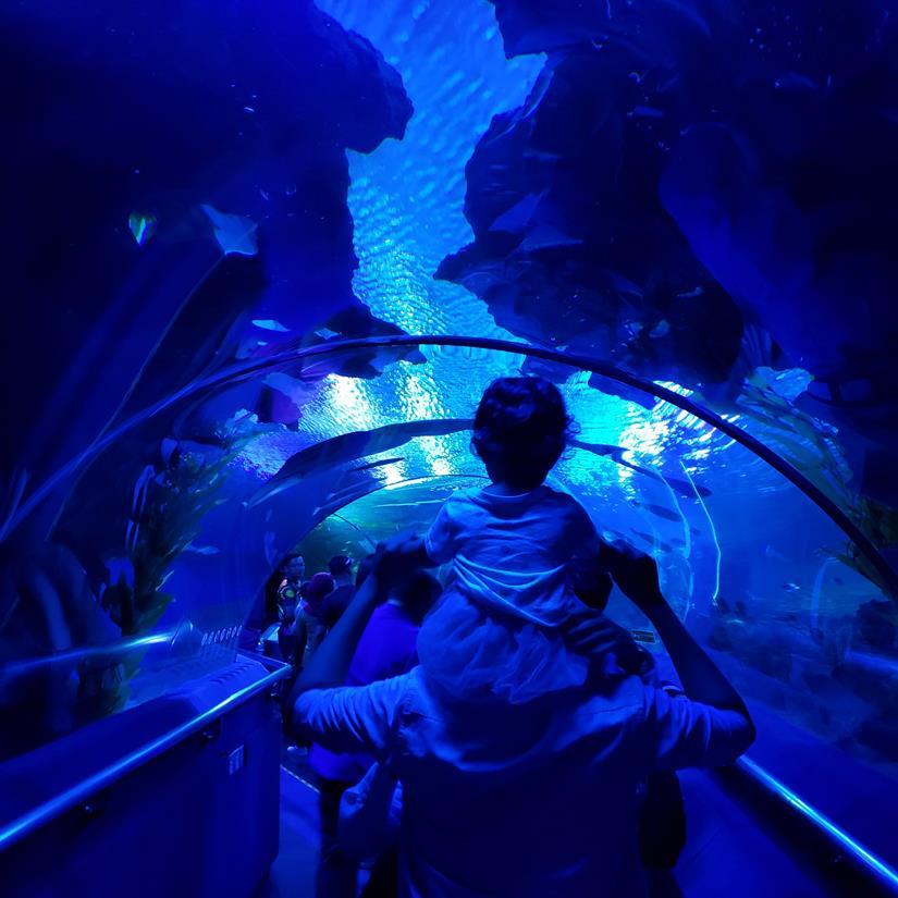 Tunel Aquário de Kuala Lumpur