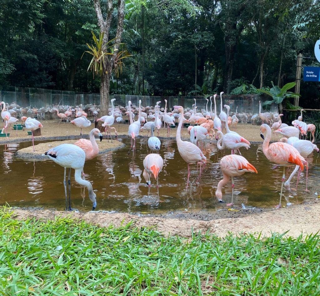 flamingos no parque das aves